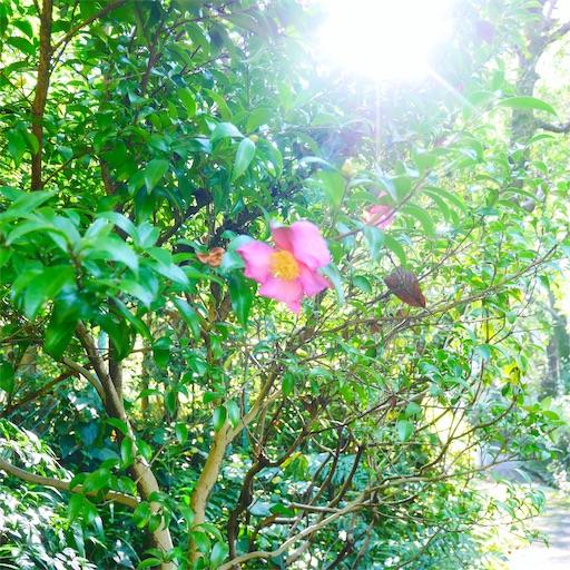 f:id:natsukihana:20191103092306j:image