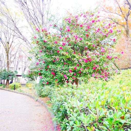 f:id:natsukihana:20191225110059j:image