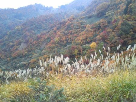 f:id:natsukikenji:20121109150306j:image:w640
