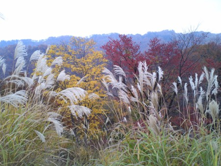 f:id:natsukikenji:20121109150346j:image:w640