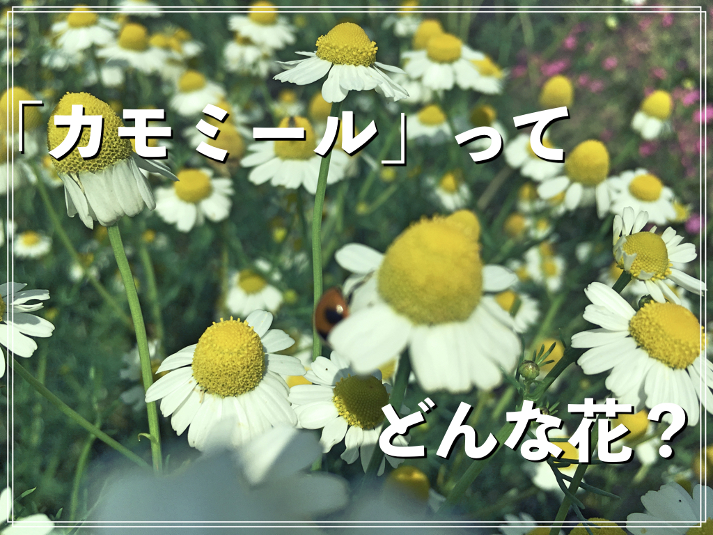 f:id:natsuking-15:20170525213907j:plain