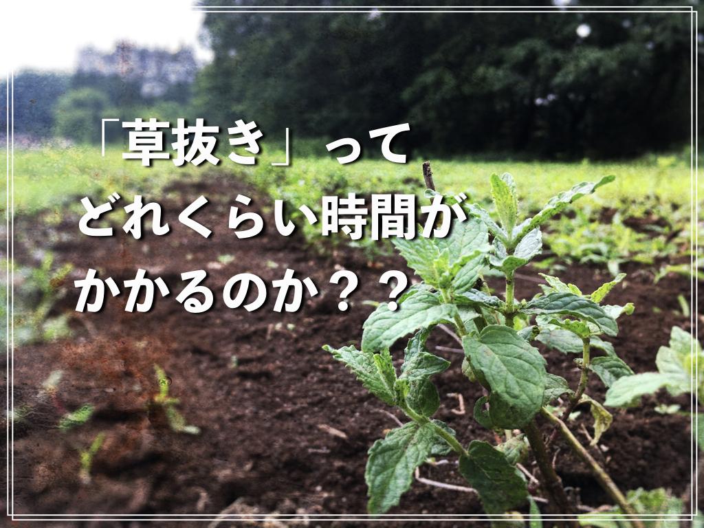 f:id:natsuking-15:20170530004042j:plain
