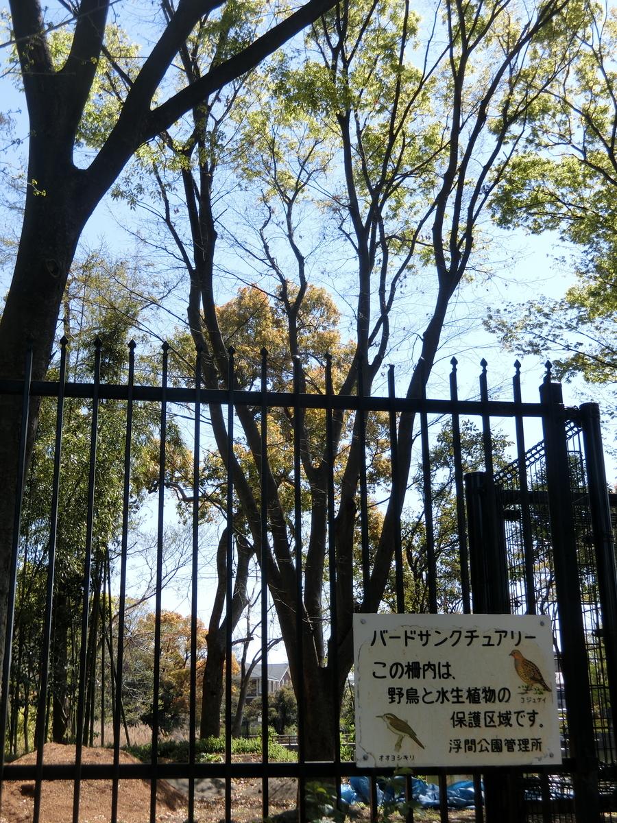 f:id:natsumikan88:20190413174038j:plain