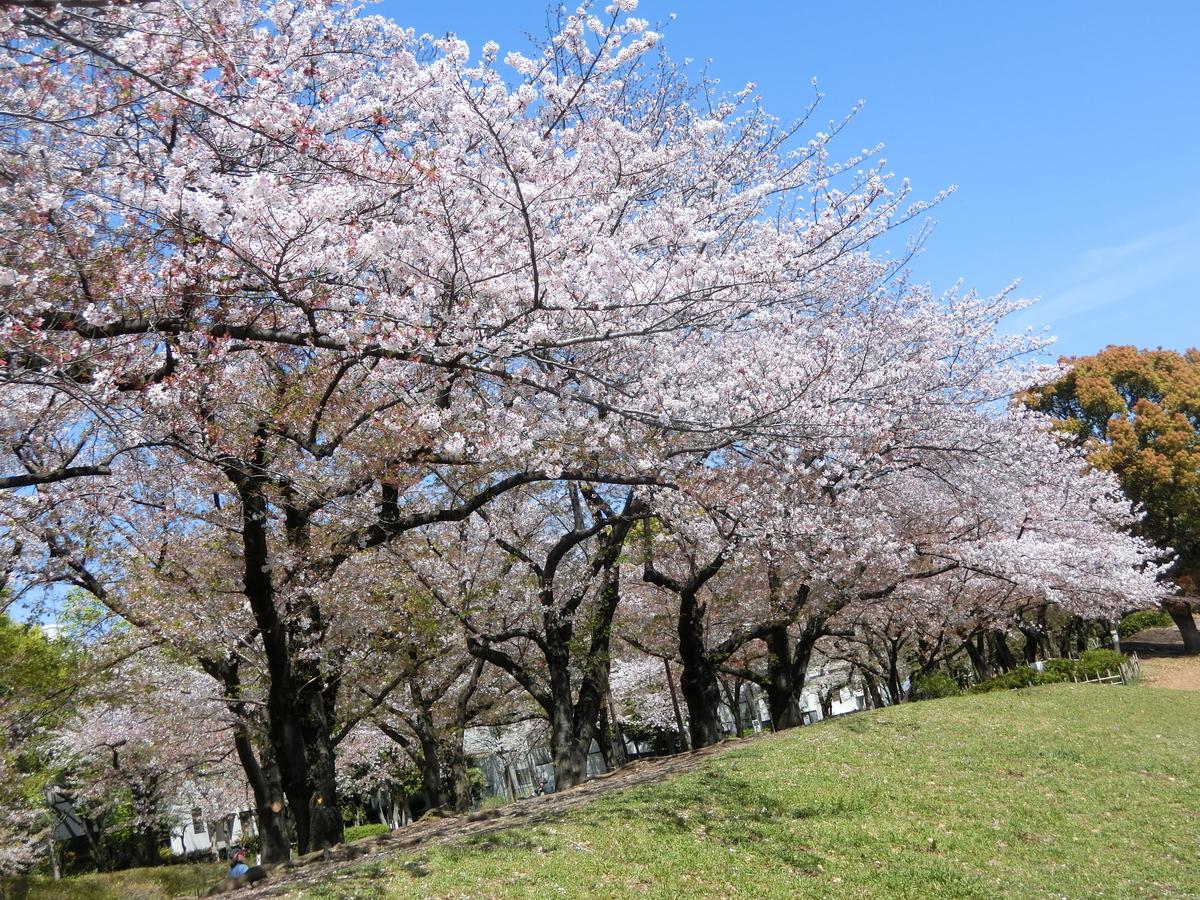 f:id:natsumikan88:20190415153114j:plain