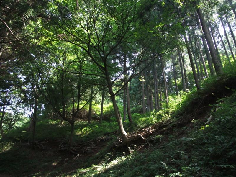 f:id:natsunokujira:20100827131846j:image