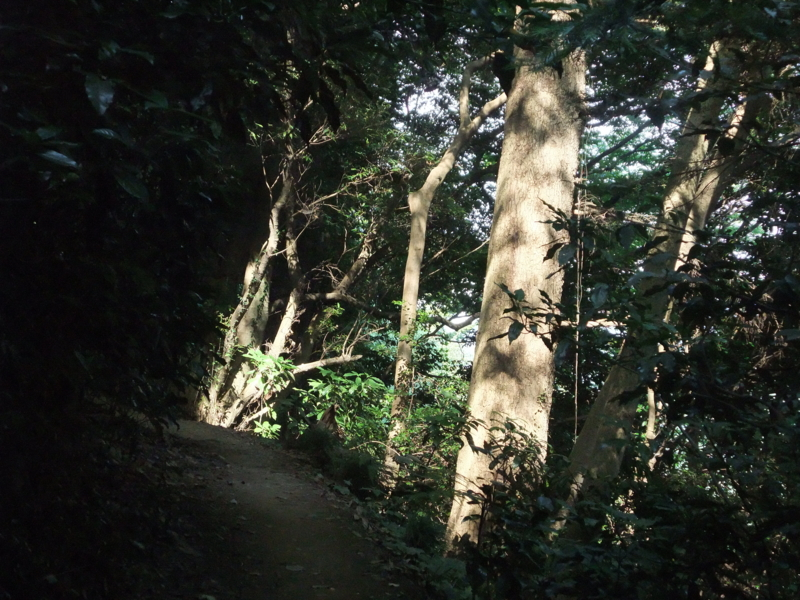 f:id:natsunokujira:20100827140529j:image