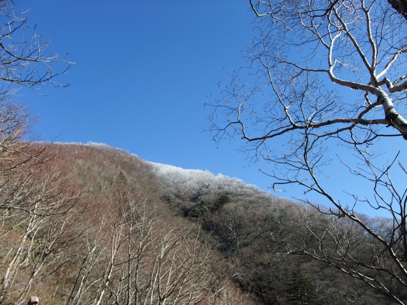 f:id:natsunokujira:20101204120640j:image