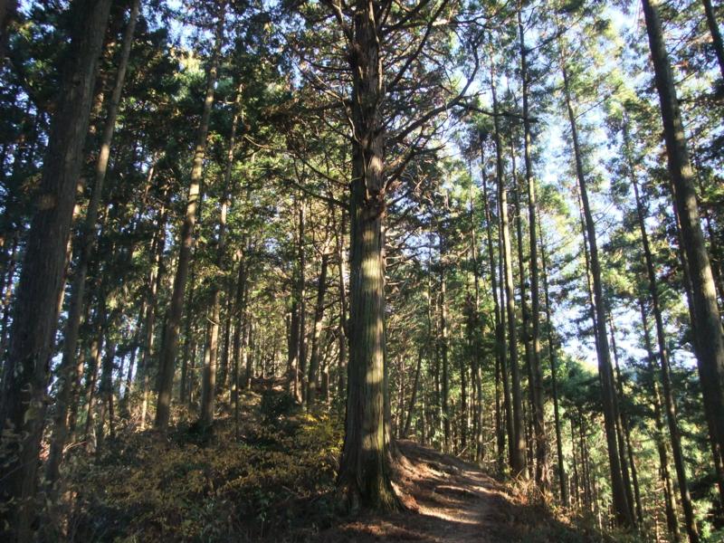 f:id:natsunokujira:20101205143248j:image