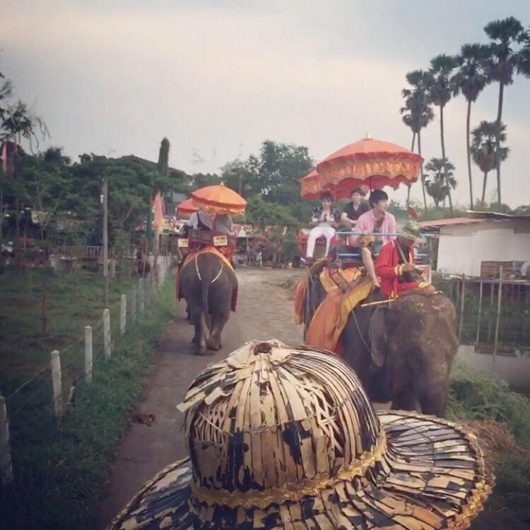 タイ旅行記③ タイで象乗りしてきました!(虎と記念撮影もしたよ!)