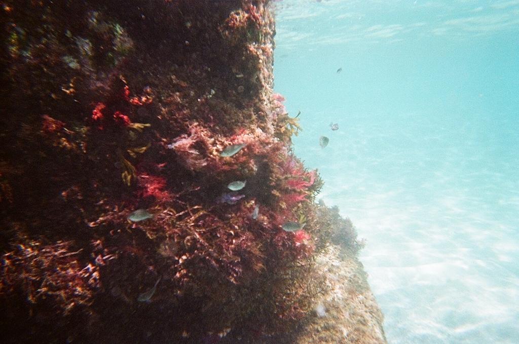 写ルンですで撮った海の中の世界