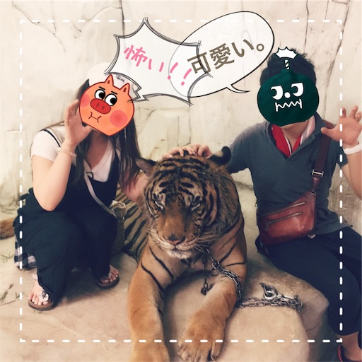 虎を触り写真を撮るn