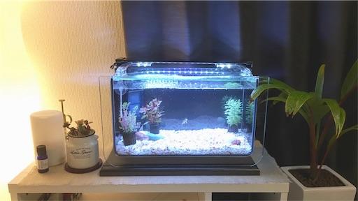 f:id:natsupocha:水槽のある部屋