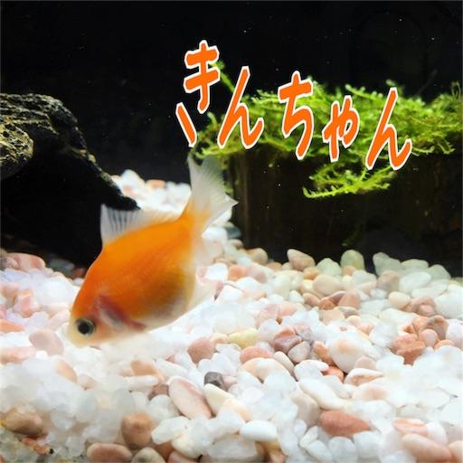 金魚のきんちゃん改め、筋トレのきんちゃん