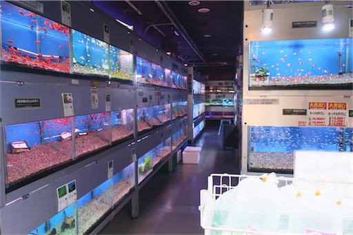 1階奥お魚コーナー