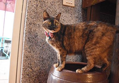 猫村217cafeの猫