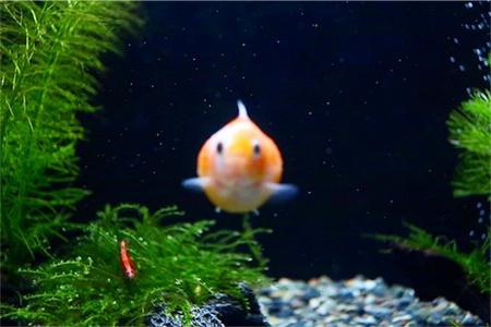 真ん中の金魚ピントが合わなさで迫りくる感じを表現。笑