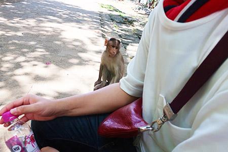 食べ物を欲しがる猿