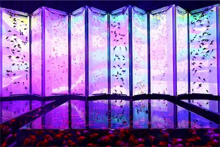 屏風の中にたくさんの金魚が