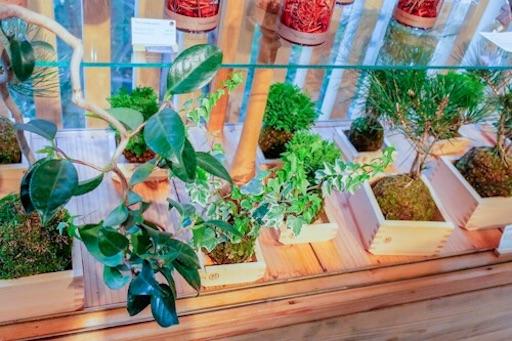 和の雑貨・盆栽