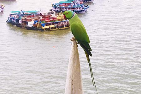 Excessive birds