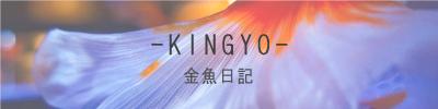 KINGYO3