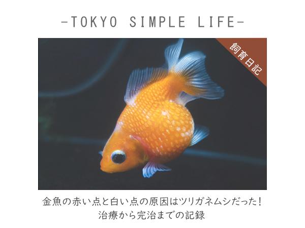 金魚の赤い点と白い点の原因はツリガネムシだった。原因から治療までの記録