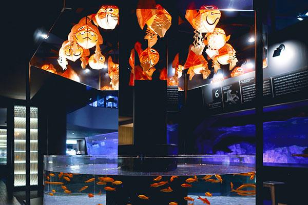 金魚ワンダーランド金魚提灯と和金