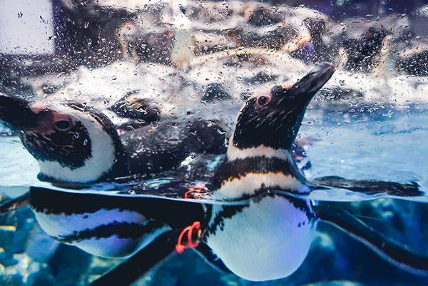 すみだ水族館ペンギン