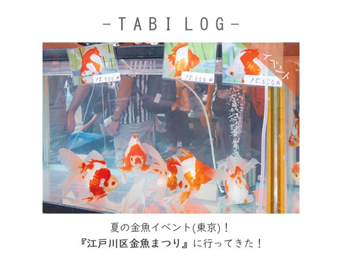 夏の金魚イベント(東京)!江戸川区金魚まつりに行ってきた!
