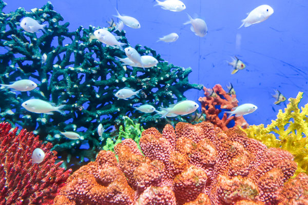 基本的に海水魚は美しく可愛い!