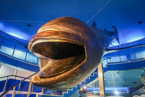 油壺マリンパークのサメの展示