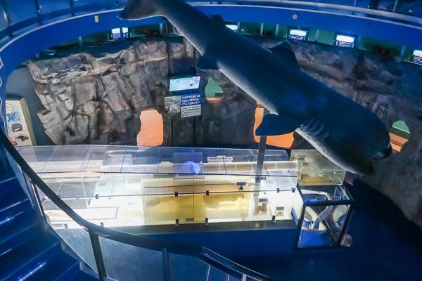 サメの内臓の展示