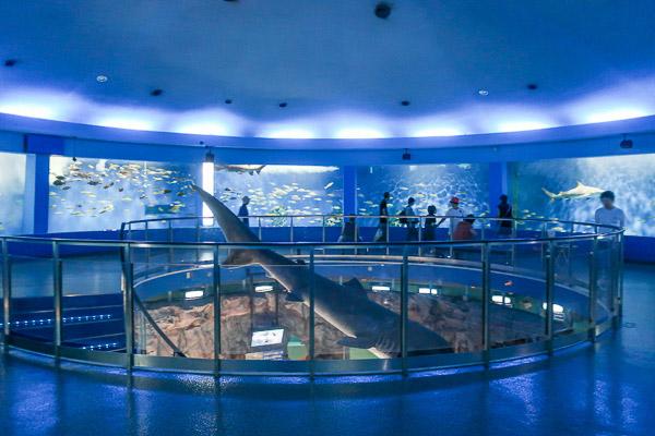 サメの巨大水槽