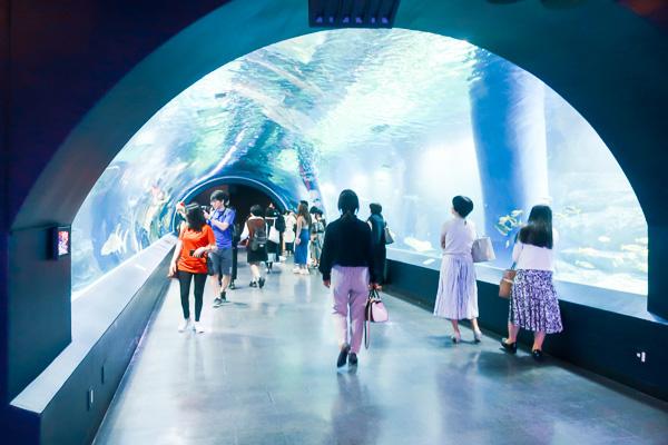 マクセルアクアパーク水中トンネル