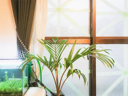 窓の台風対策