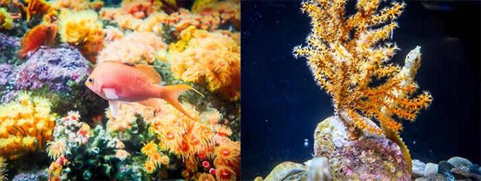 江ノ島水族館カラフルな魚