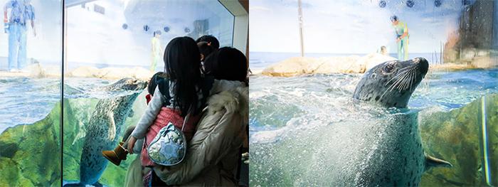 江ノ島水族館ゴマフアザラシ