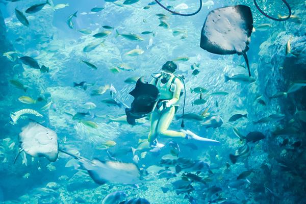 巨大相模湾水槽でのダイビングショーが面白い!