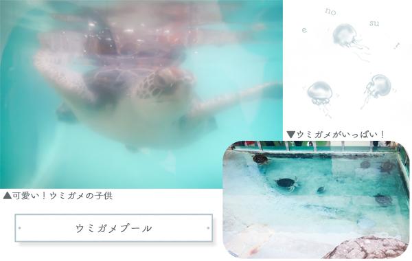 新江ノ島水族館ウミガメ