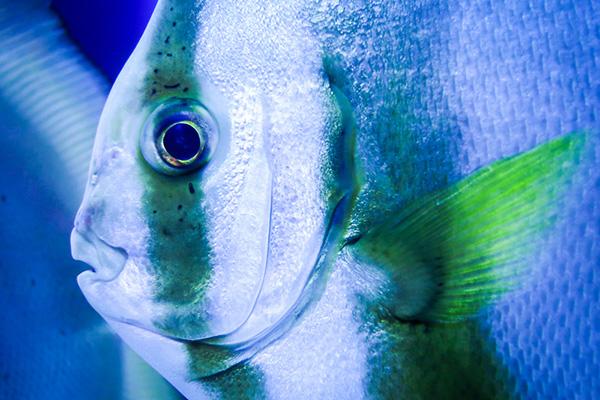 可愛い魚(名無し)