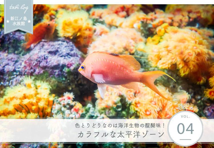 見どころ④ カラフルな太平洋ゾーン