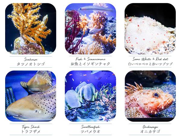 新江ノ島水族館太平洋ゾーンの魚