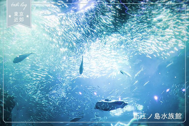 フォトジェニックスポット!新江ノ島水族館の見どころと美しい写真たち