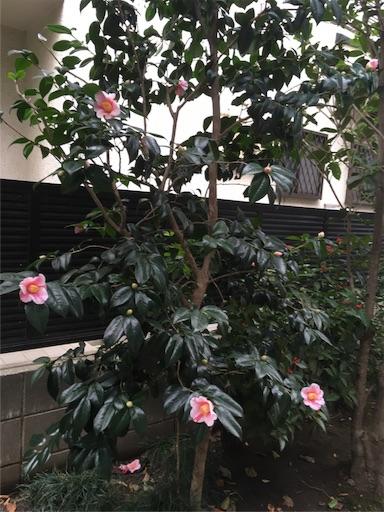 f:id:natsuyono:20171119092707j:image