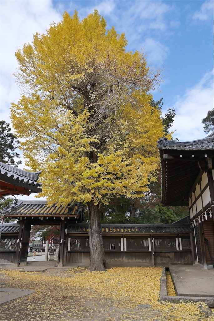 f:id:natural-japub:20171112113053j:image
