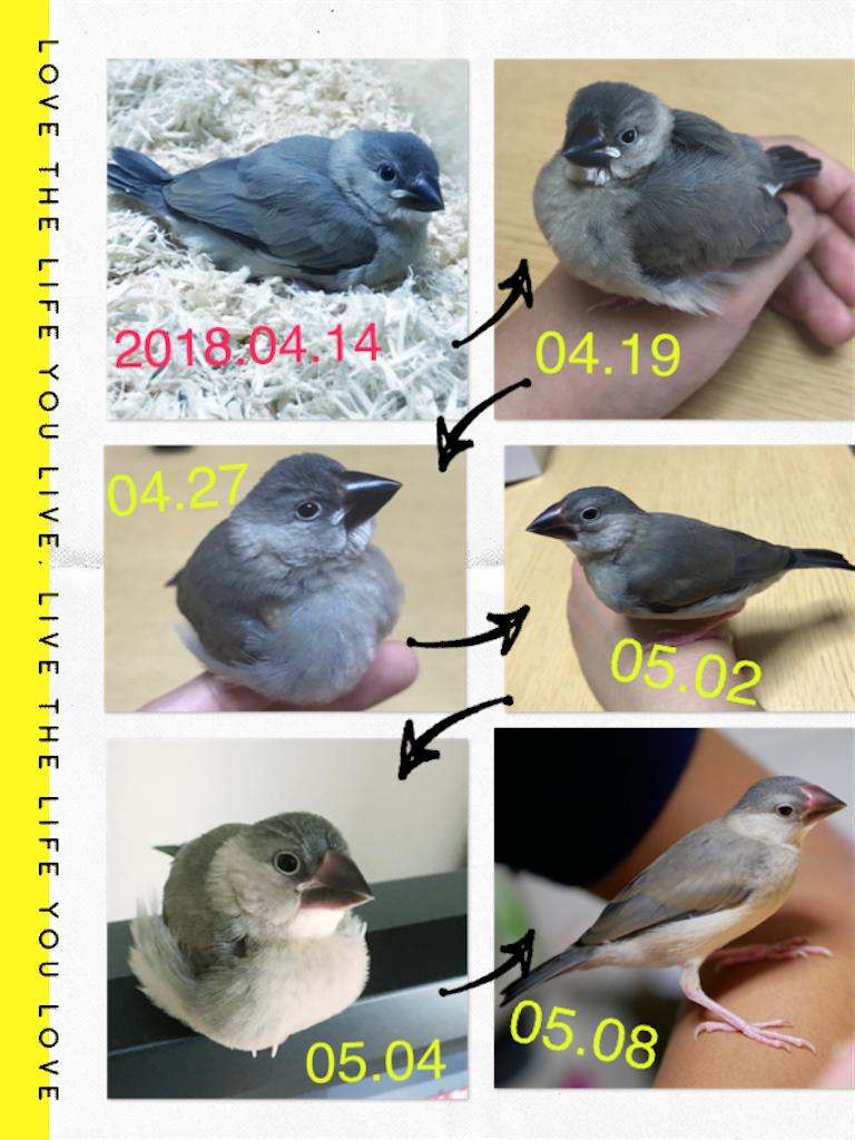 f:id:natural-life-25:20180511154612p:image