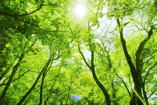 f:id:natural-life-com:20200901222852j:plain
