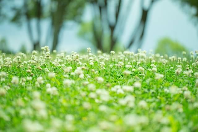 f:id:natural-life-com:20200903204243j:plain