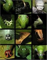 f:id:naturalist2008:20130525004659j:image