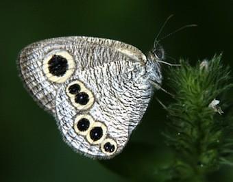 f:id:naturalist2008:20130525005054j:image